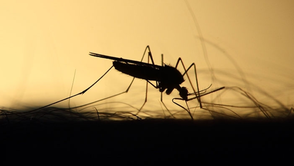 Nine cases of dengue in Delhi this year till now