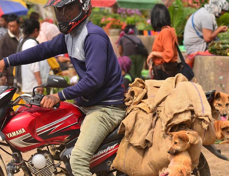 Nagaland's Dog Meat Ban Could Further 'Divide' NE & Mainland India